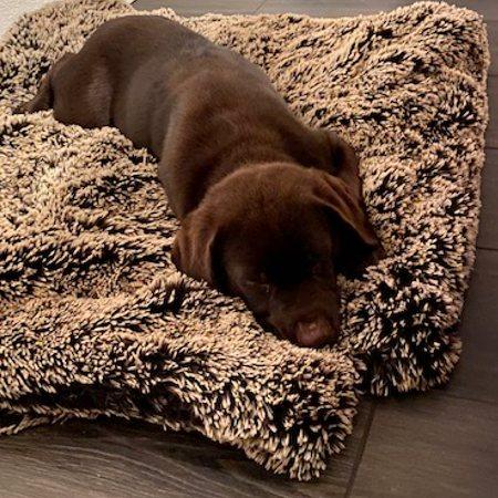 fluffy chocolat hundedecke