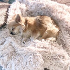 hundedecke fluffy dream on white
