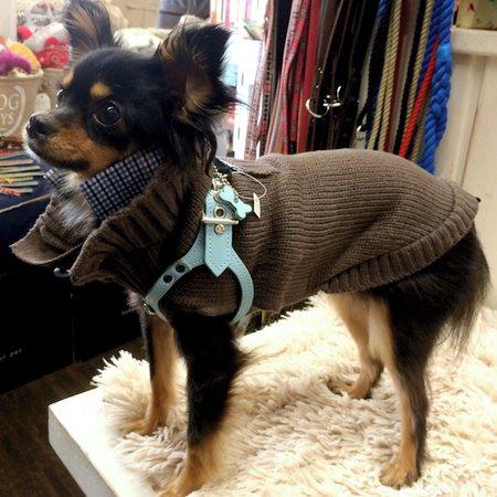hundepullover louvre