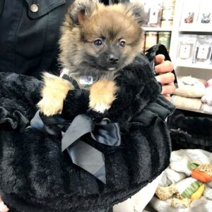 hundetasche snuggle pugs schwarz