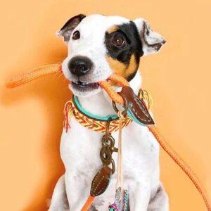 dog with a mission gypsi nova