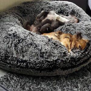 donut hundebett dream on midnight frost