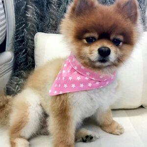 pink star bandana