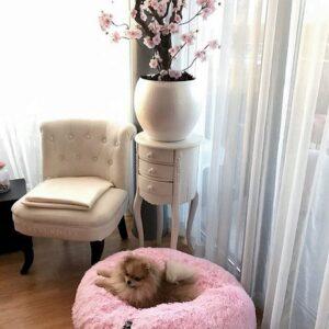 donut hundebett dream on rosa