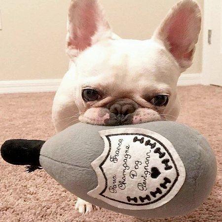 luxury toy champagne dog perignonn