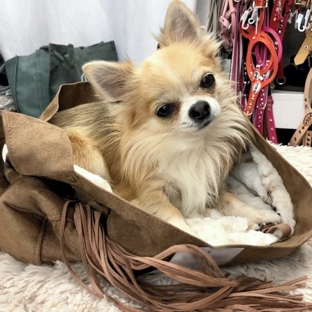 hundebag cuddle