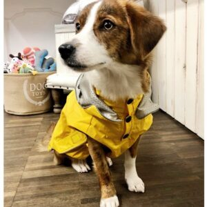 hunde regenveste first