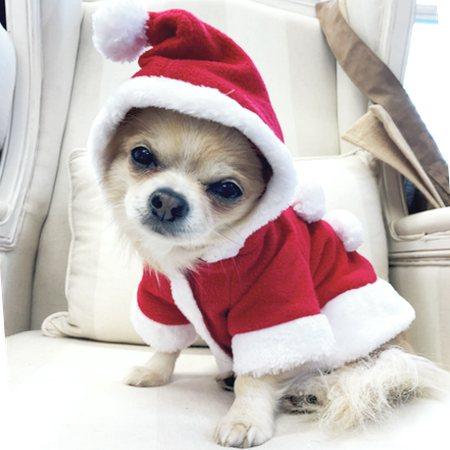 hunde weihnachtmantel mit ponpon