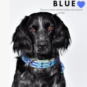 ibiza hundehalsband türkis blau