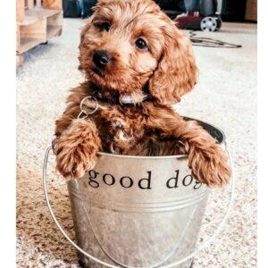 good dog toy geschenkeimer