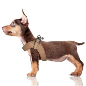 hundeharness kite chocolat
