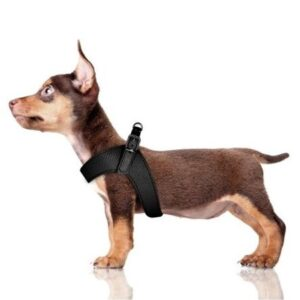 hundeharness kite schwarz