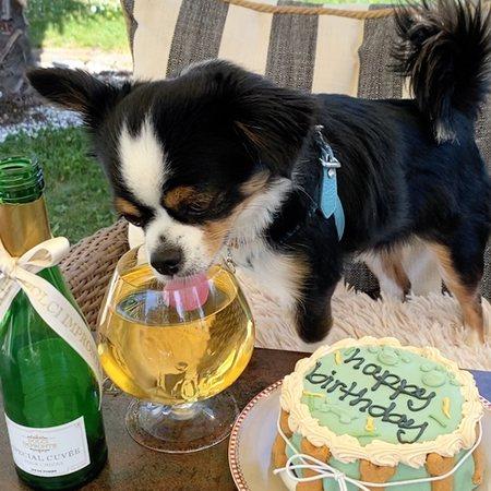 hunde champagner
