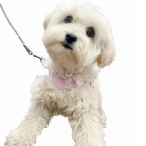 hundeharness kite luxury soft