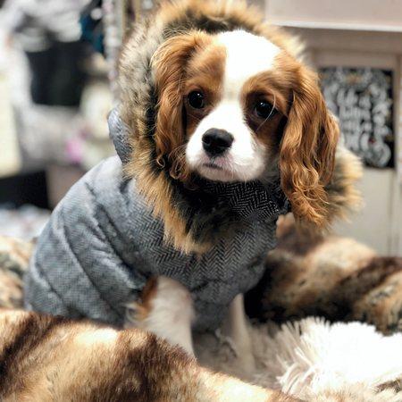 daunen veste luxury harringbone von i love my dog