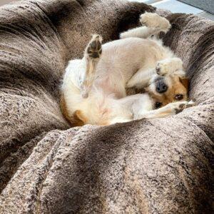 donut hundebett dream on simba