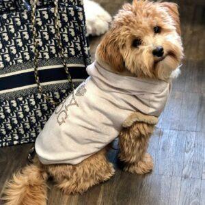 hunde hoodie love u forever champagner