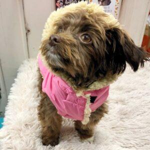 regenveste i love my dog pink