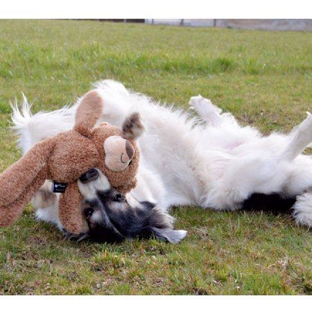 tomi der hund