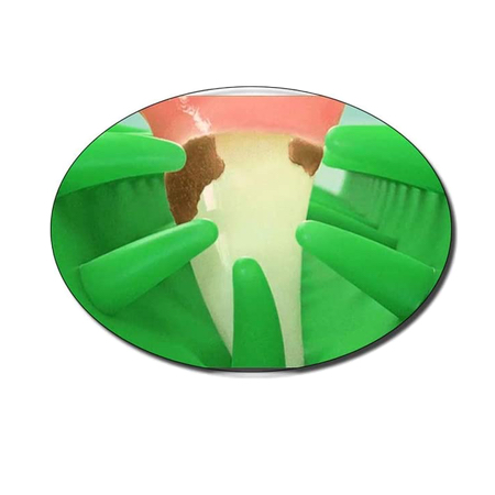 zahnreingungs rubber mint toy