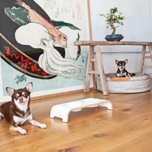 dogbar weiss mit porzellan